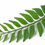 Curry leaves to control hair falls