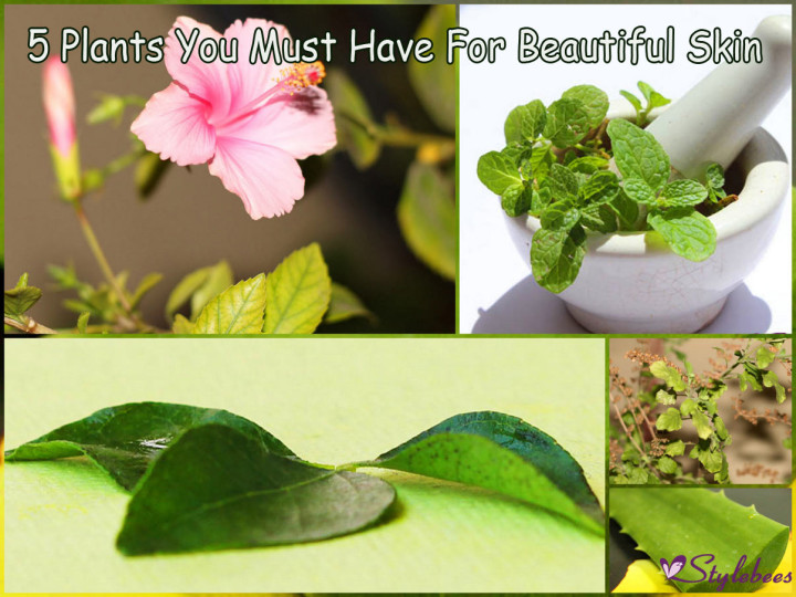 5 Plants to have in home garden for beautiful skin
