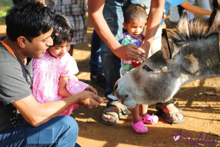 Kids feeding animals at Martin farm Bangalore