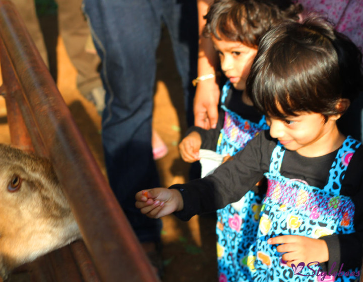 kids feeding animals at Martin Farm Bangalore 2